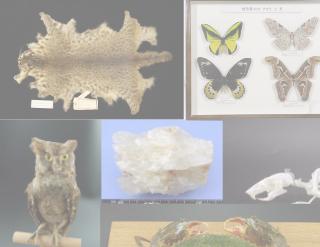 自然系展示室